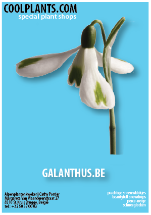 www.galanthus.eu by coolplants.com